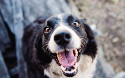 Are you Confusing your dog?